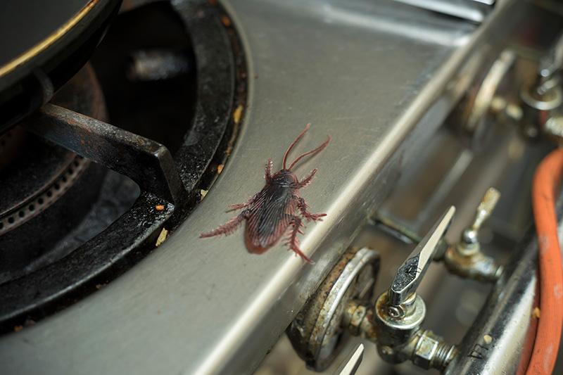 大阪の飲食店に現れた害虫を駆除する
