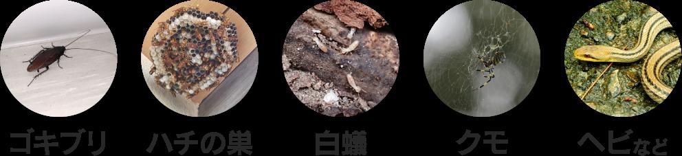ゴキブリ、ハチの巣、白蟻、クモ、ヘビなど